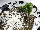 Рецепта Риба задушена в лозови листа